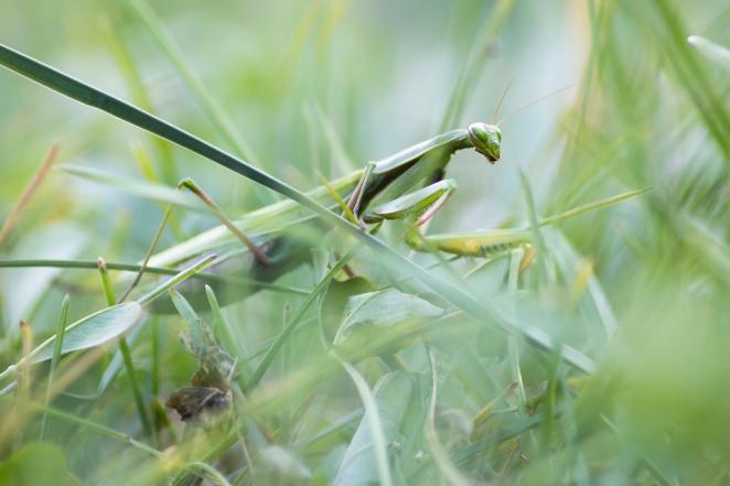 mantis 3