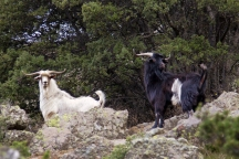 Cabres Solana 6