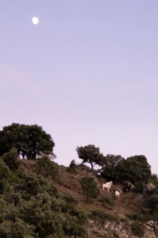Cabres Solana 3