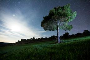 arbre nocturn