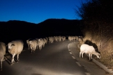 carretera ovelles