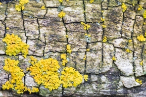 textura arbre
