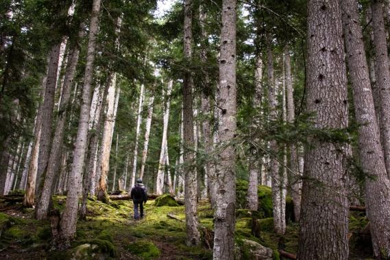 Bosc del Gerdar, Pallars Sobirà.